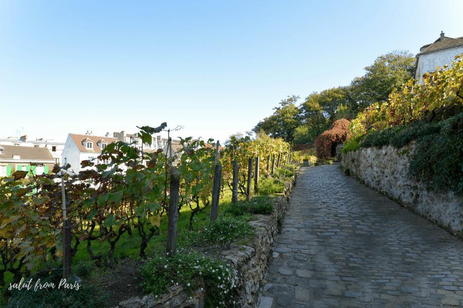 Montmartre wine festival 2021