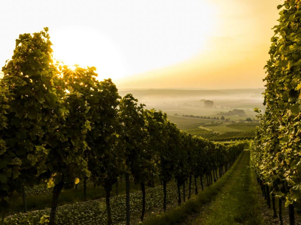 Catching a Paris to Bordeaux train brings you in no time to the famous wine region