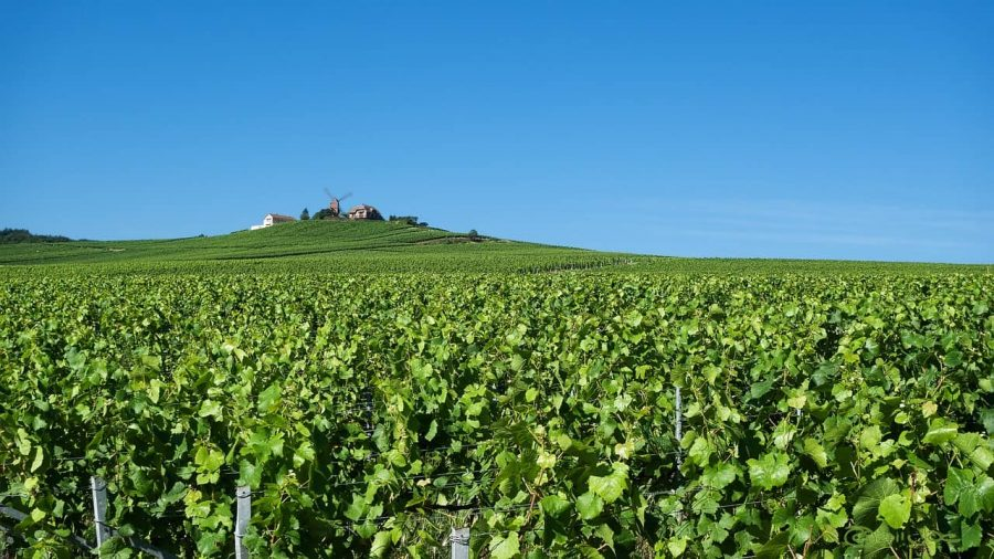 Champagne day trip from Paris - one thing you will quickly learn is that only grapes growing in the region can be used for Champagne